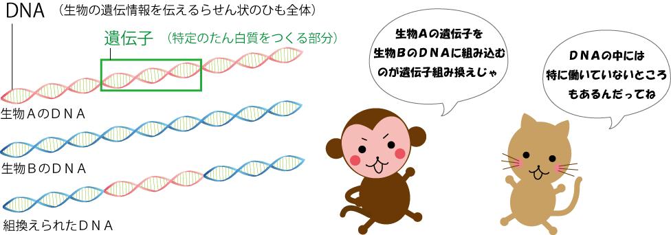 DNAと遺伝子