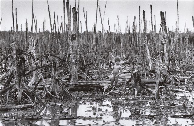 枯葉剤で丸裸になった大地、ベトナム